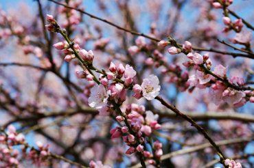 Spring Maintenance Tips
